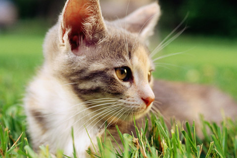 Share your favorite wallpapers-cat-close-up-wallpaper.jpg