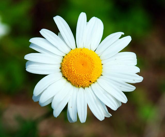 Share your favorite wallpapers-white-flower-hq-wallpaper.jpg
