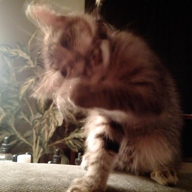Post your best kitten pictures taken with a Passport-img_20151030_195212.jpg