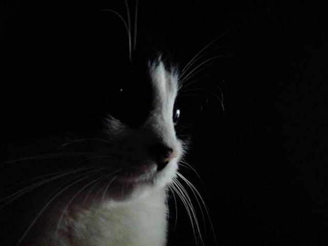 Post your best kitten pictures taken with a Passport-img_20151122_043916.jpg