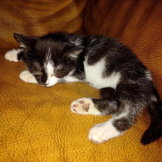 Post your best kitten pictures taken with a Passport-img_20151117_193521.jpg