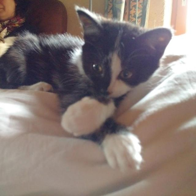 Post your best kitten pictures taken with a Passport-img_20151127_132354.jpg