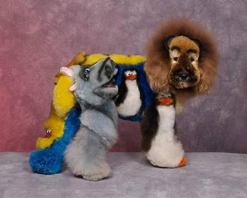 Nothing to say really-crazy-dog-grooming-compet-008-thumb-500x400-13121.jpg