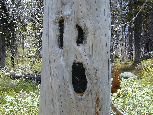 AT&T PRIV Software update-scream-tree.jpg