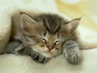 The Last post Wins!-sleeping-little-cat.jpg