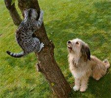 The Last post Wins!-dog-chasing-cat.jpg