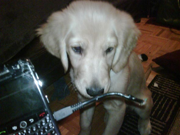 Converting to BlackBerry!!-dog-bb.jpg