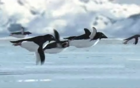 BlackBerry Z10 Phones Fly Like Penguins Off Shelves In U.S.-penguin_flight.jpg