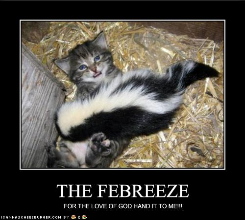 The CB 1M Challenge-funny_pictures_kitten_begs_for_the_febreeze_random_funny_animals-s500x450-22285-580.jpg