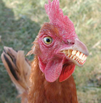 The CB 1M Challenge-chicken_with_teeth.jpg