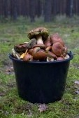 The Friendly Darkside: Tea, Coffee, and big or small Sodas?-7879183-fresh-mushrooms-bucket-woods.jpg