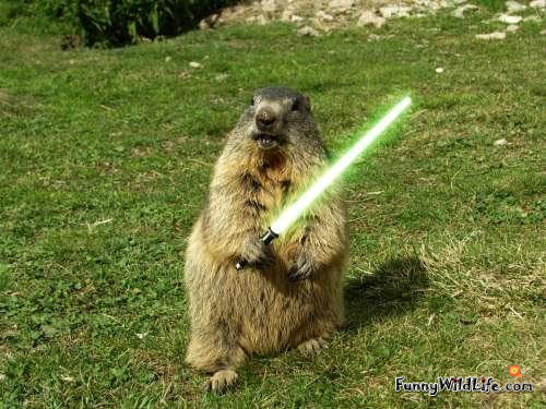 PB 64Gb Free when upgrade arrives (terms and conditions apply)-funny-groundhog-03.jpg