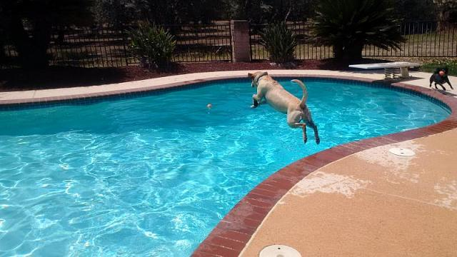 The CrackBerry Pet Parade-woody-mid-flight-.jpg