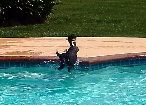 The CrackBerry Pet Parade-max-pool-mid-jump-_2.jpg
