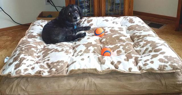 The CrackBerry Pet Parade-max-loves-new-bed.jpg