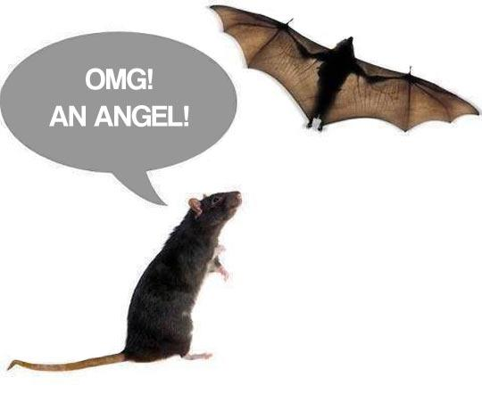 Happiness is....-funny-rat-bat-angel.jpg
