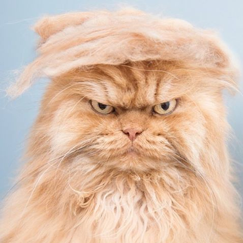 Official everyfin' to do with PlayBook hijack thread?-082415-trump-your-cat-2.jpg