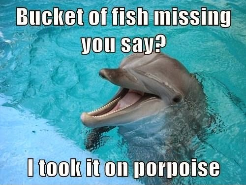 The CB 1M Challenge-funny-dolphin-47.jpg